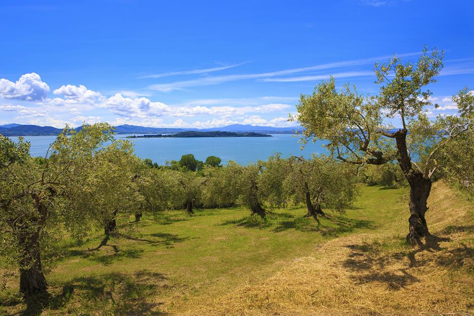 Lago-di-Transimeno.jpg